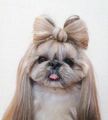 9张图告诉你为什么要留长头发 连宠物都知道留长发才能扎美美发型