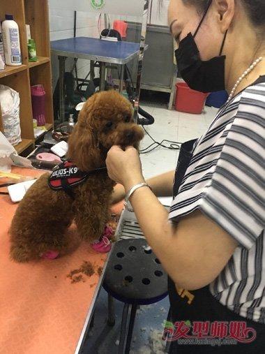 给泰迪狗修毛视频_怎样修剪泰迪眼睛的毛 自己给泰迪修剪毛教程_发型师姐